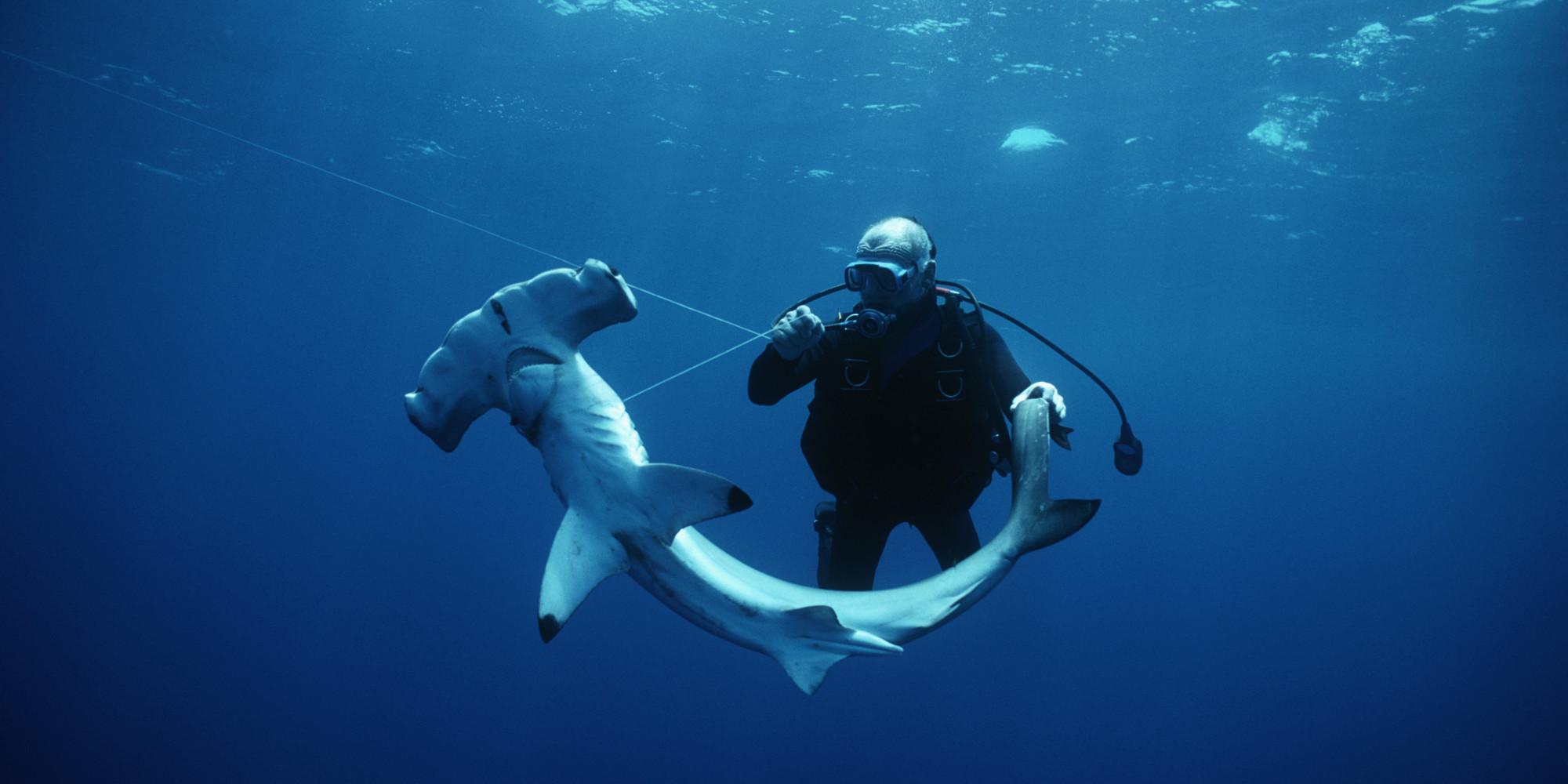 carolina hammerhead shark newly named species discovered by