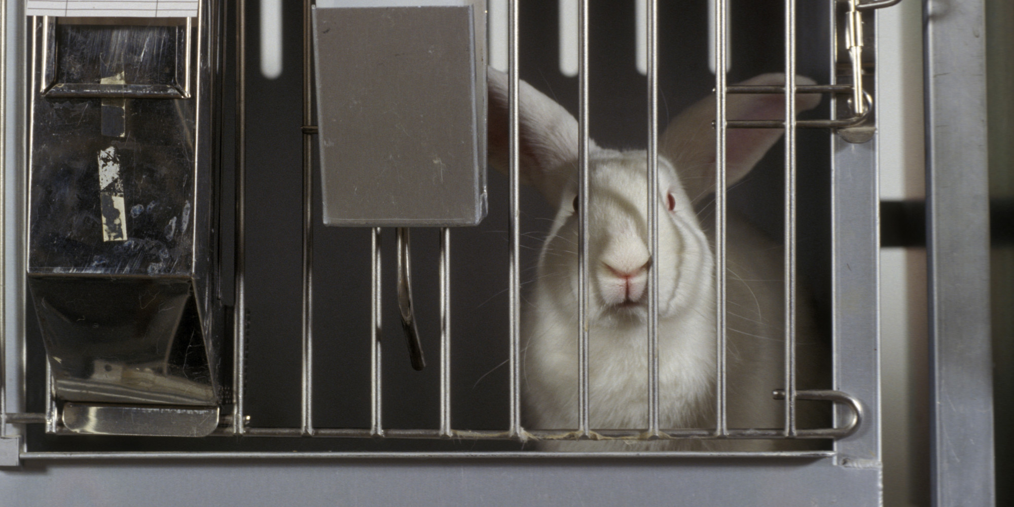 animal testing testing 1 2 3 Treatments for animals developed using animal testing also include pacemakers for heart disease and remedies 1 animal testing has contributed to many life-saving.