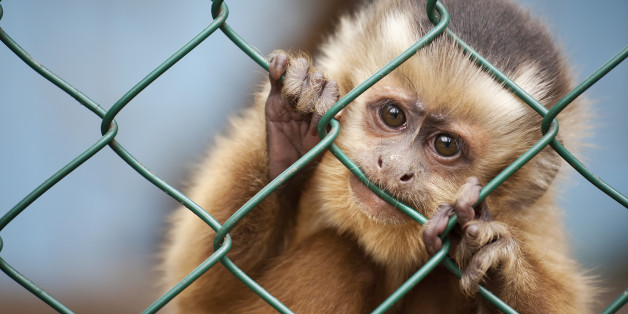 Universities Killed More Than A Million Animals In Scientific Research Last Year Alone