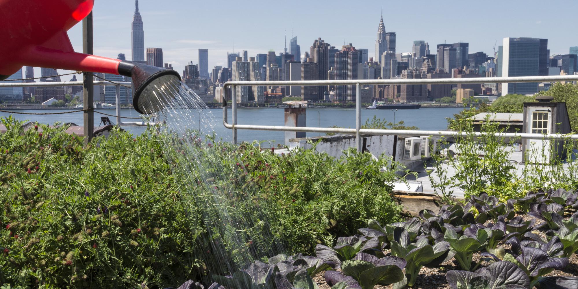 the necessity of urban farming essay