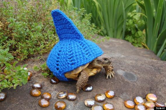 tortoise cosy