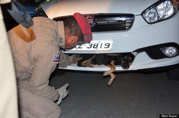 dog car grill brazil