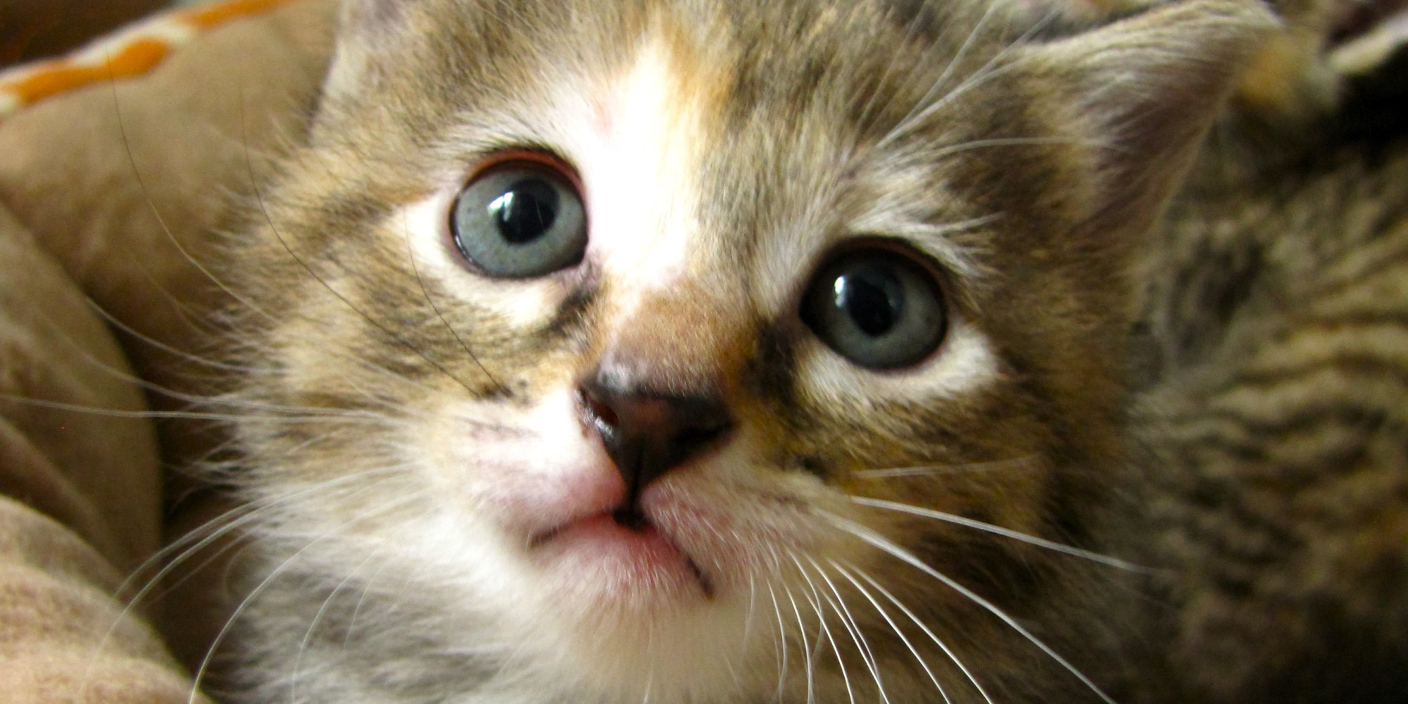 bladder crystals in cats