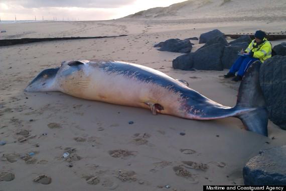 whale norfolk beach