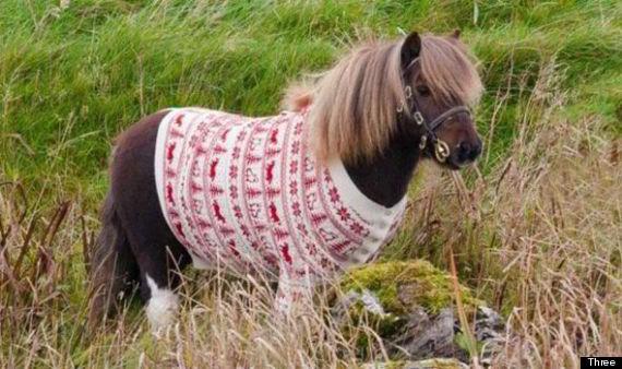 dancing pony three christmas advert