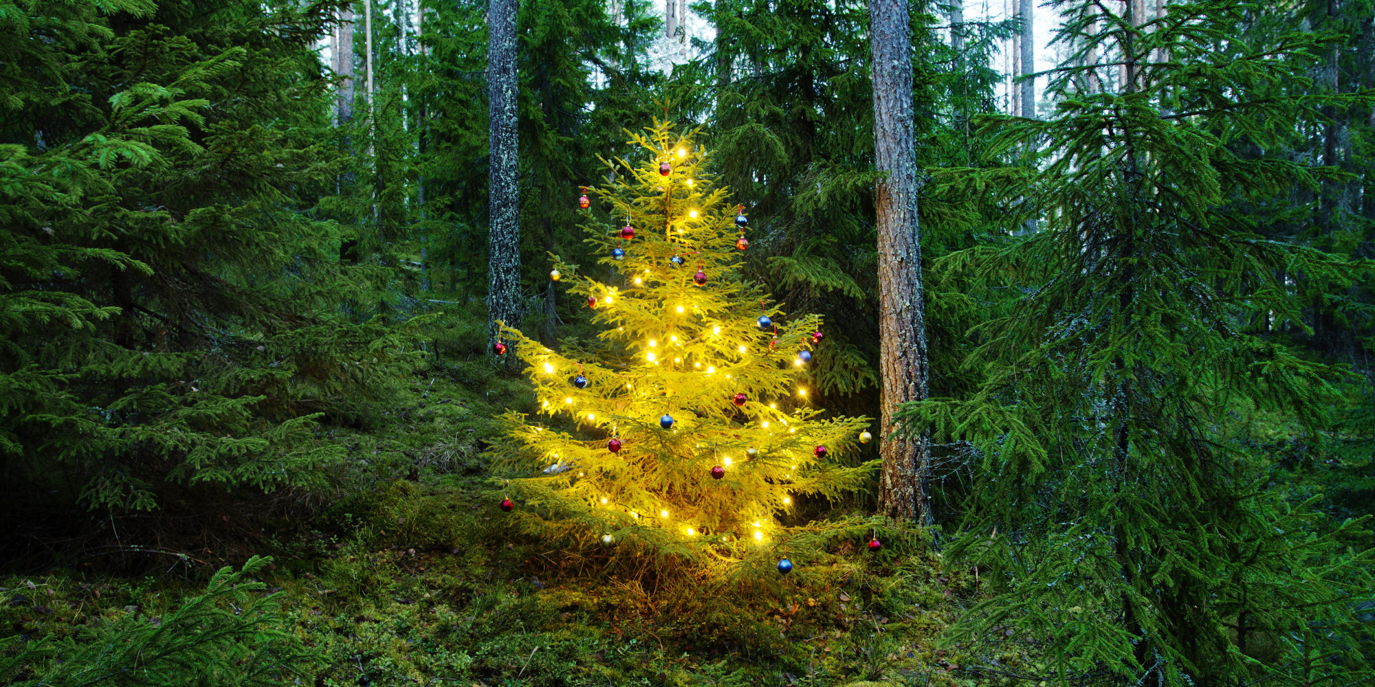 how green is your tree sustainable holiday tips huffpost