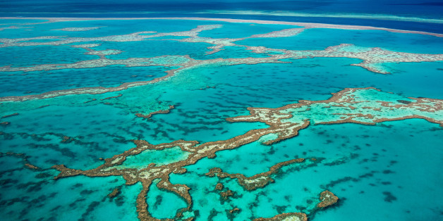 Scientists Hope Coral Reef Breeding Will Save Great Barrier Reef