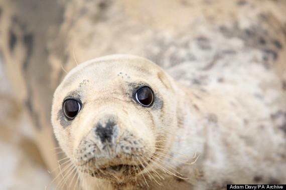 seals found