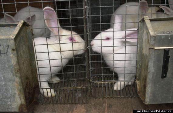 animal testing uk
