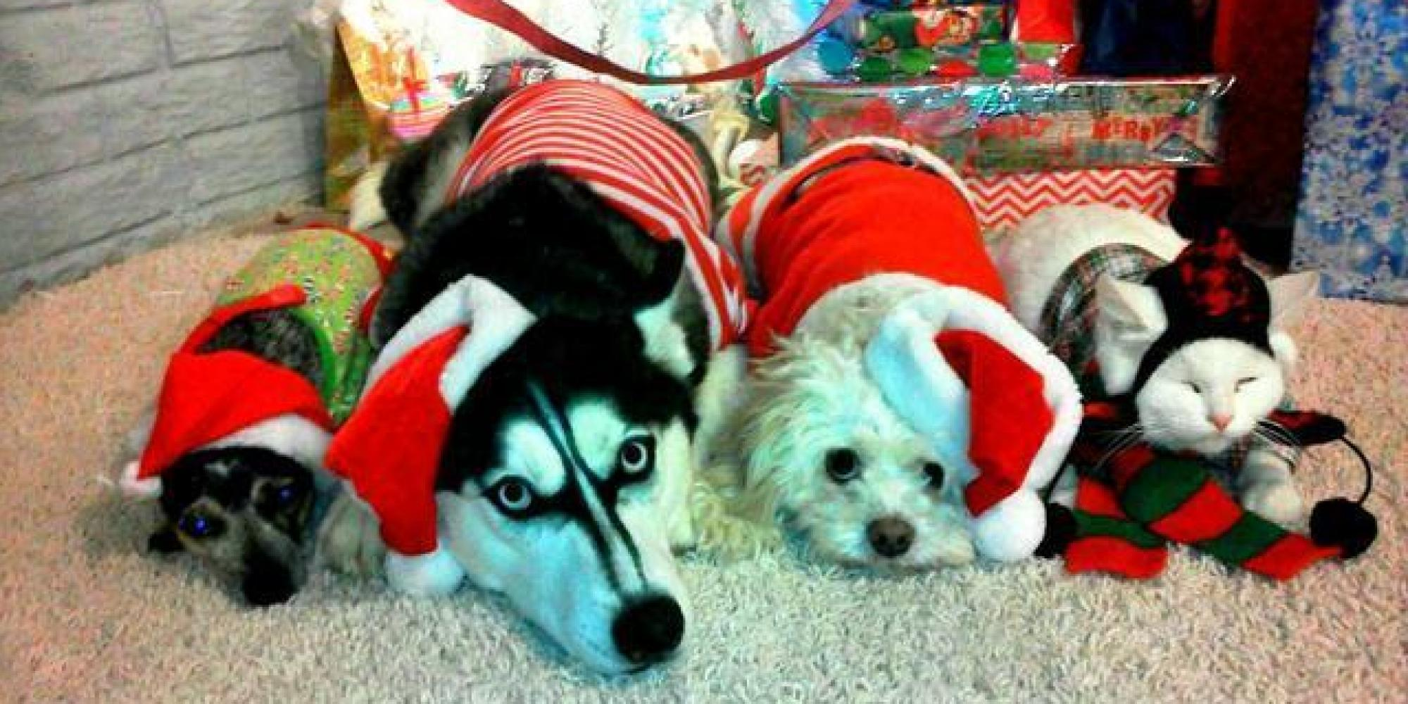 50 Pets In Christmas Costumes That Will Get You In The ...