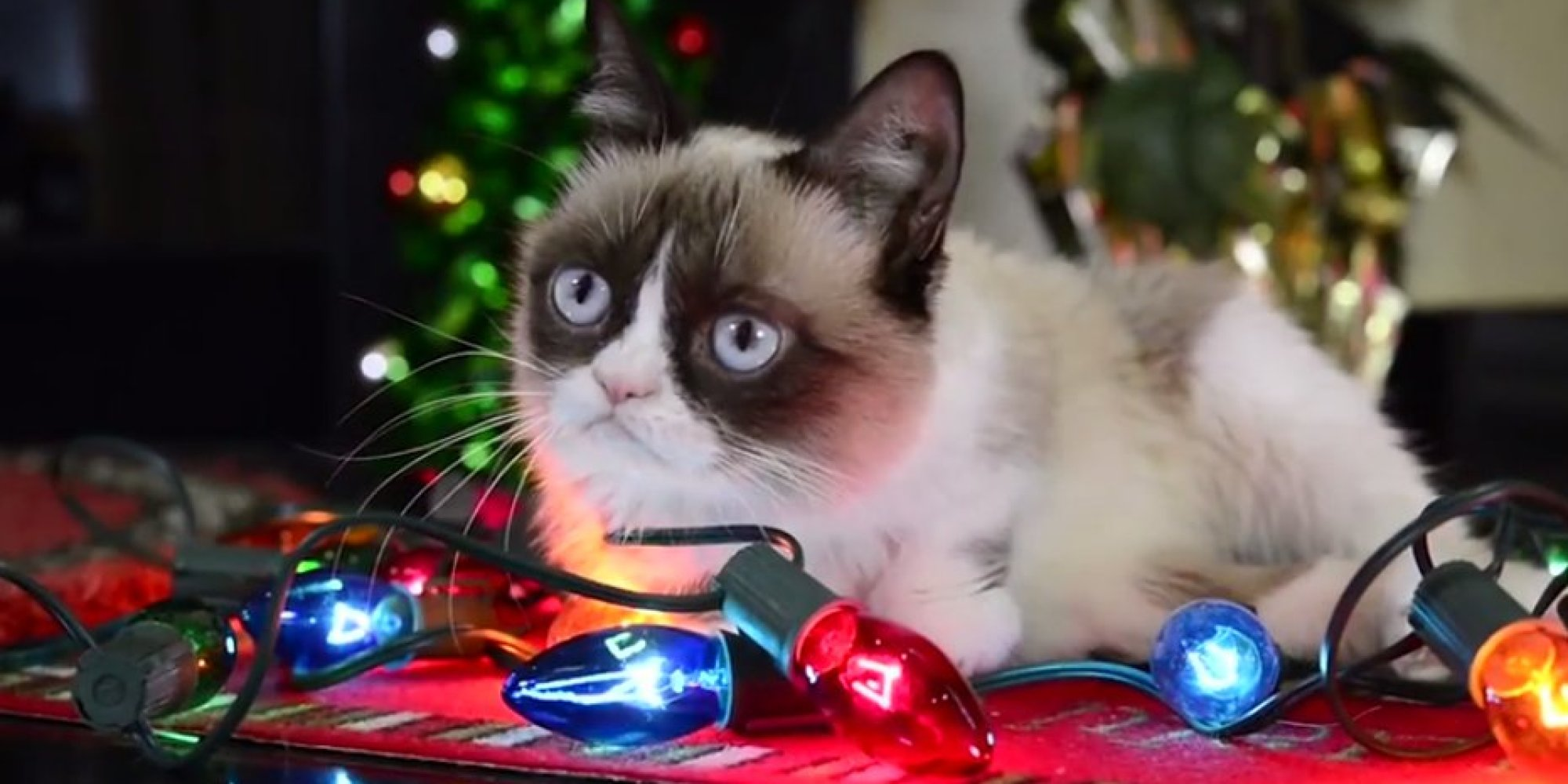 Grumpy Cat Proves 'It's Hard To Be A Cat At Christmas' | HuffPost