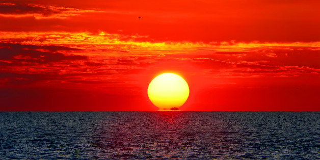 birds and the sea on red sunset'...