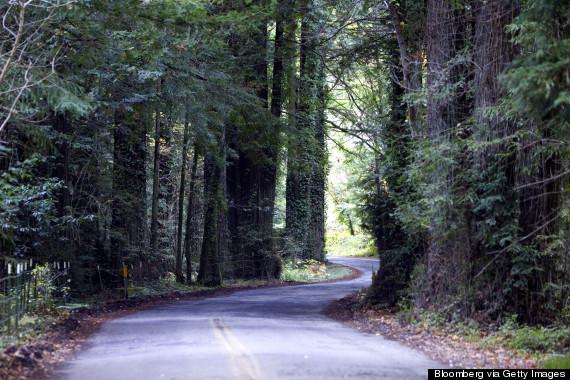 bohemian grove