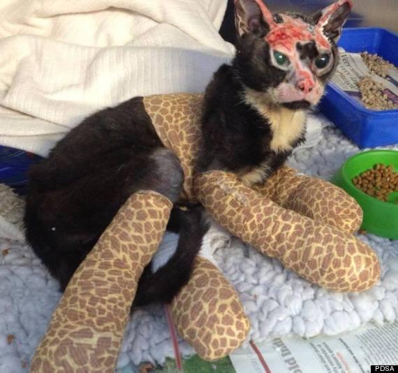 robbie cat