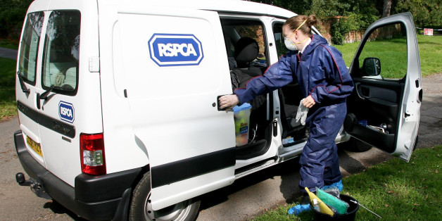 An RSPCA Officer prepares her van to enter Hunts Hill Farm in Normandy, Surrey, during the Foot and Mouth outbreak in the area.