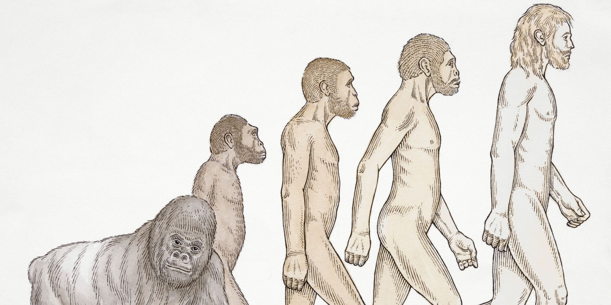darwin destroyed the concept of human Social effects of evolutionary theory all weeded out and destroyed of overcoming modern day misinterpretations of the concept of survival of.