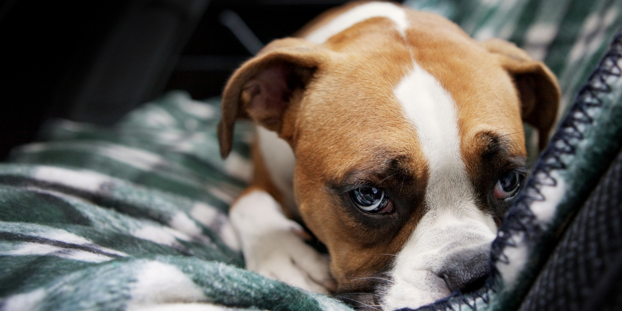 Who Gets The Pets In A Divorce What You Need To Consider