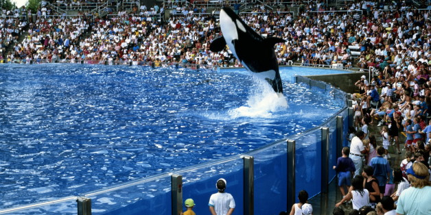 Incidents At Seaworld Parks: SeaWorld-Owned IP Address Linked To Majority Of Votes In