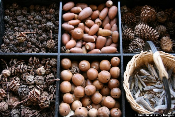 acorns and pine nuts