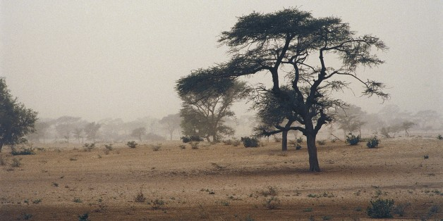 Lions Nearing Extinction In West Africa, Study Finds