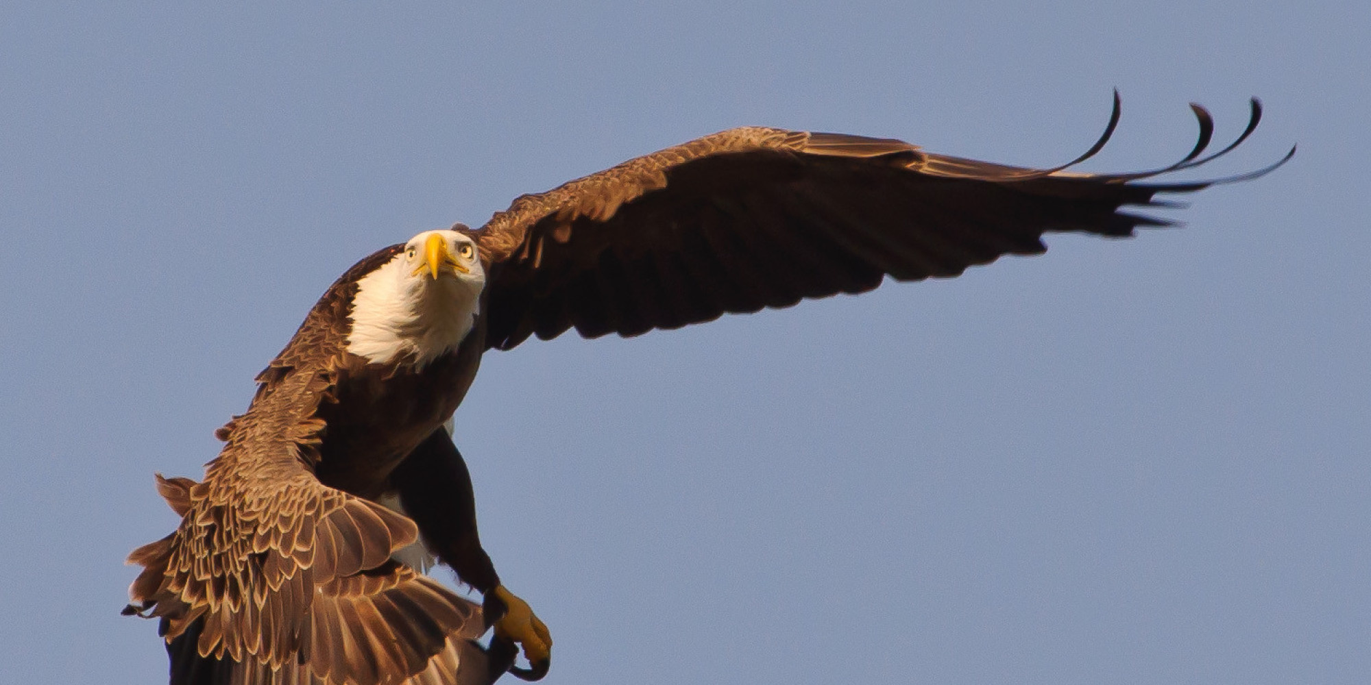 Eagles are worth fighting for today huffpost biocorpaavc Choice Image