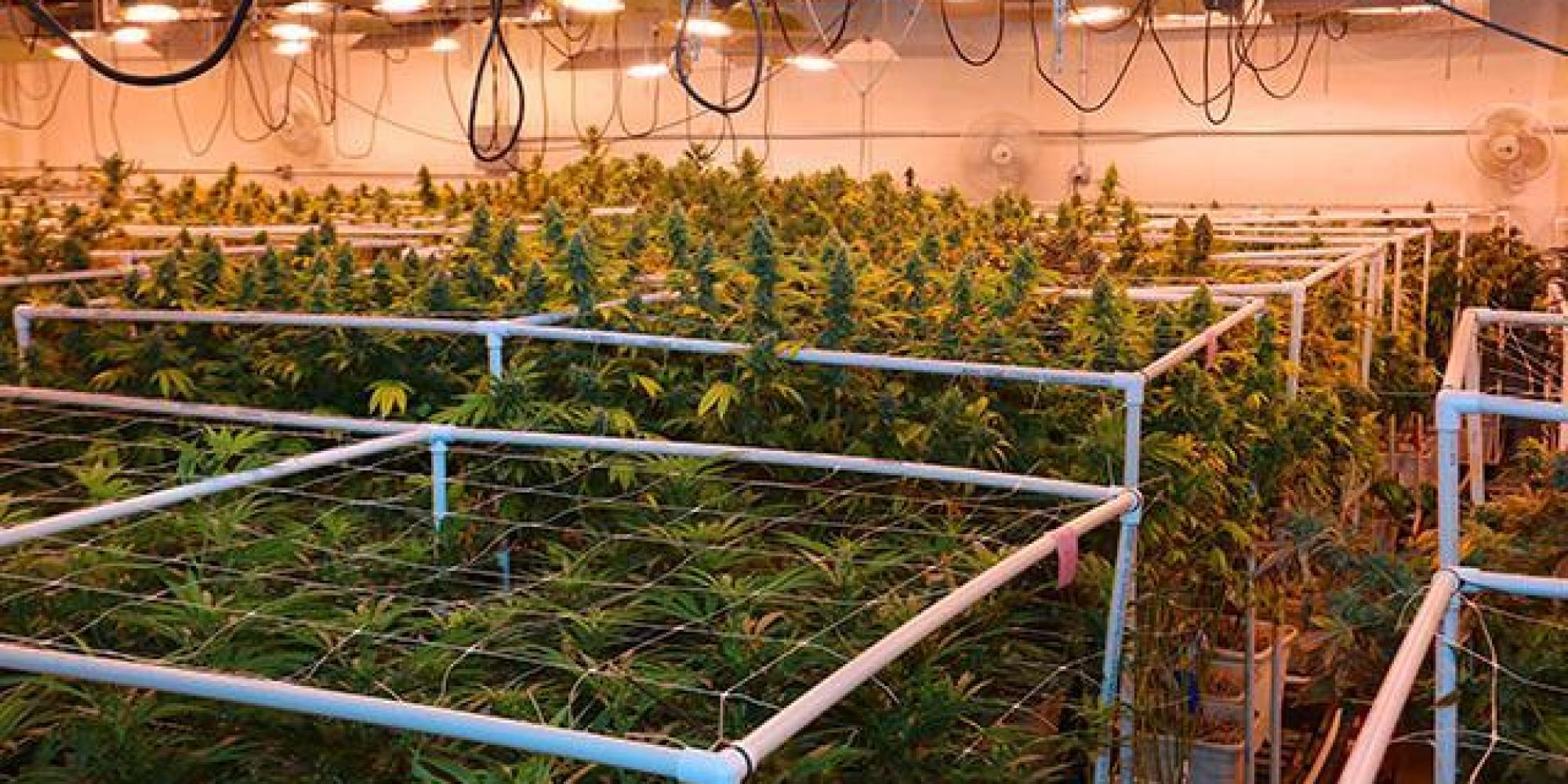 How to open a pot dispensary huffpost - Commercial grow room design plans ...
