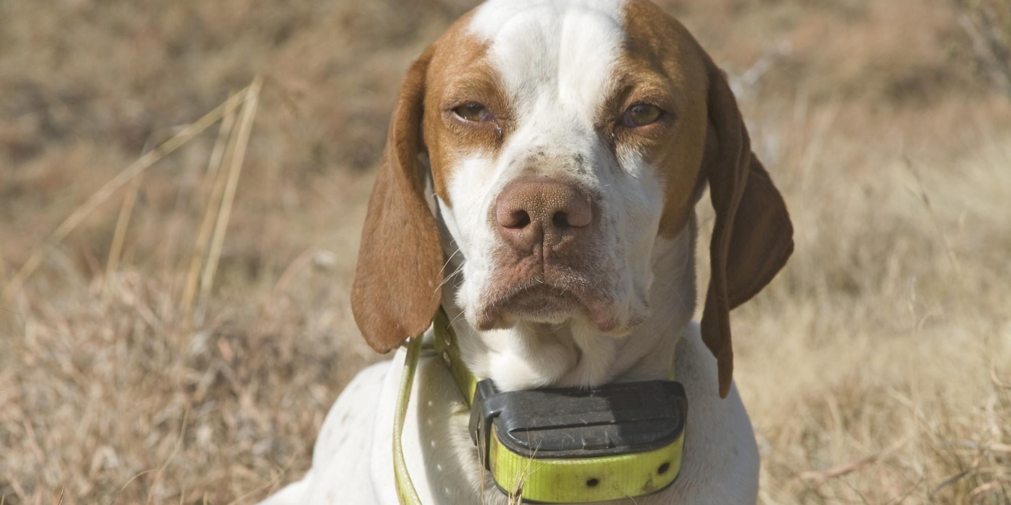 Dog Shock Collar South Africa