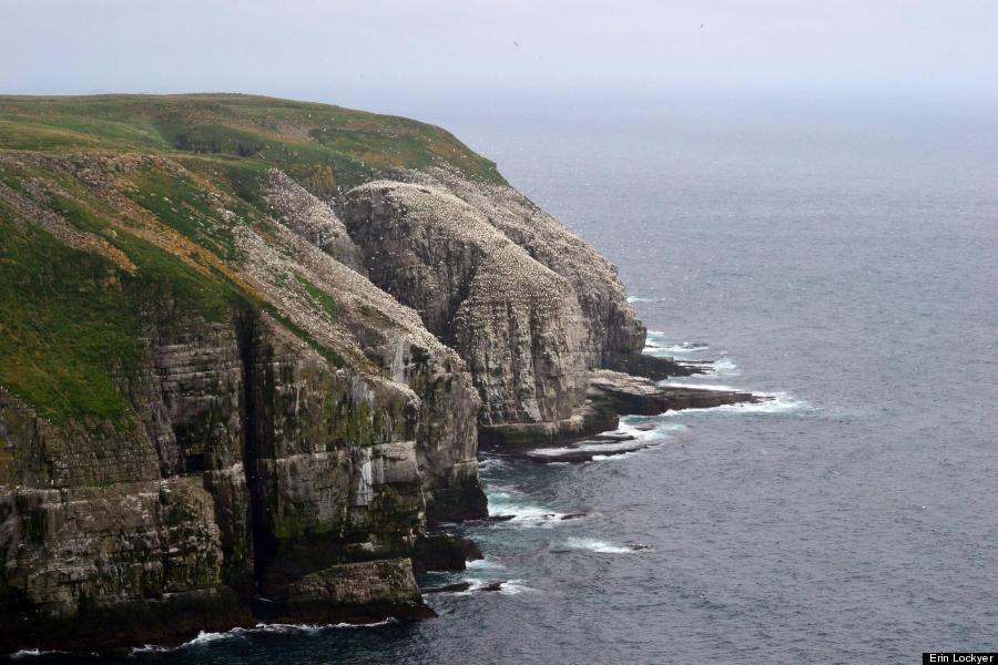 cape st mary newfoundland