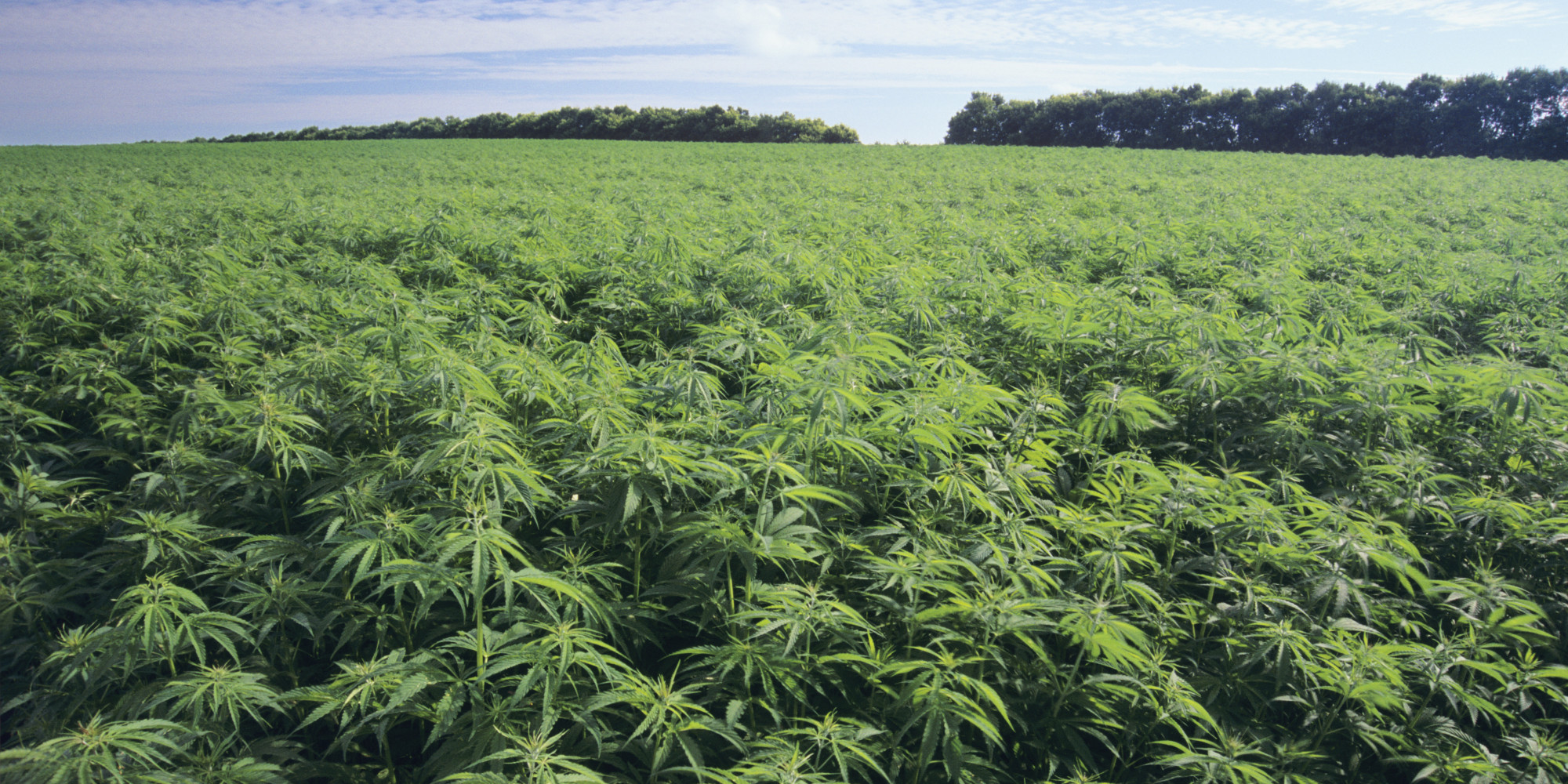 Image result for Virginia Cannabis