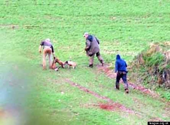 fox hunting devon