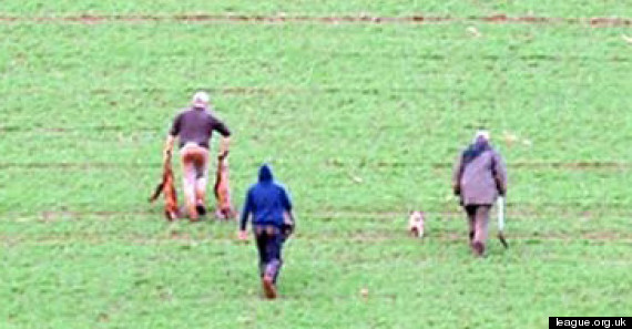 fox hunt devon