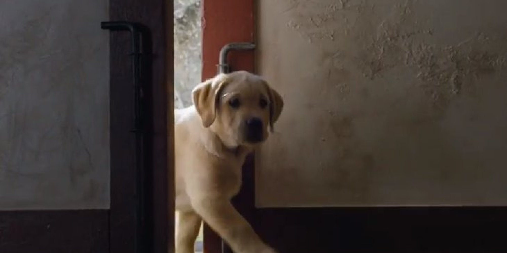 Budweiser s puppy love super bowl commercial 2014 wins our hearts again huffpost