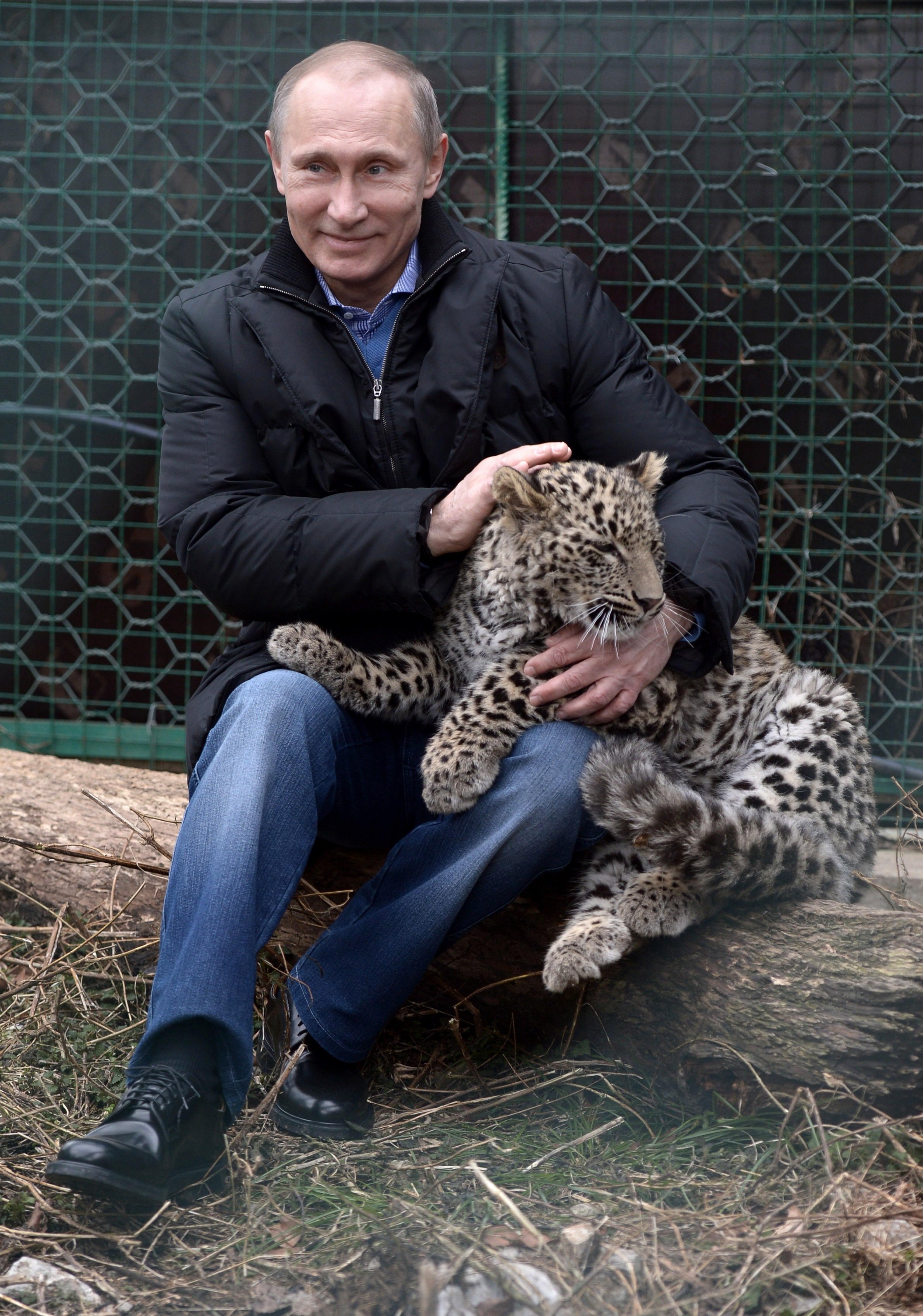 vladimir putin leopard
