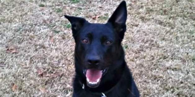 Fred The Police Dog Gets Fired By Police Department For Being Lazy