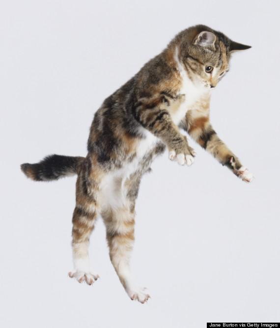 cat wind