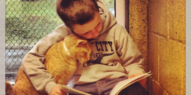 Dieses Bild eines Book Book Buddy mit einer Katze eroberte das Internet im Sturm.
