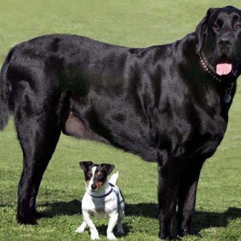 hund6