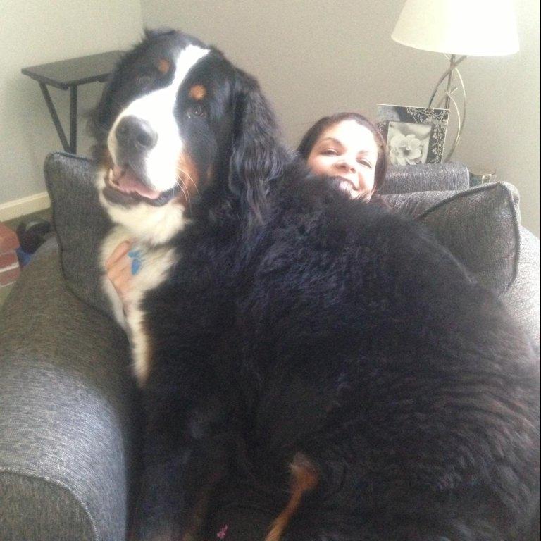 diese 14 riesen hunde beweisen gro e liebe kommt mit viel sabber. Black Bedroom Furniture Sets. Home Design Ideas