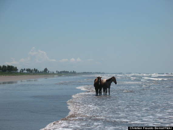 playa novillero mexico