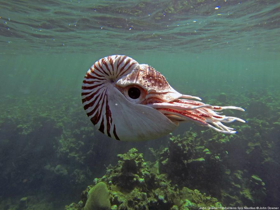 spy nautilus