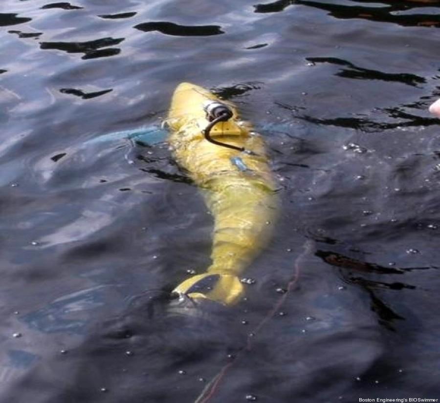 bioswimmer