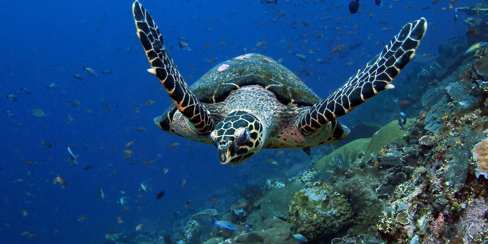 Endangered Ocean: Sea Turtles