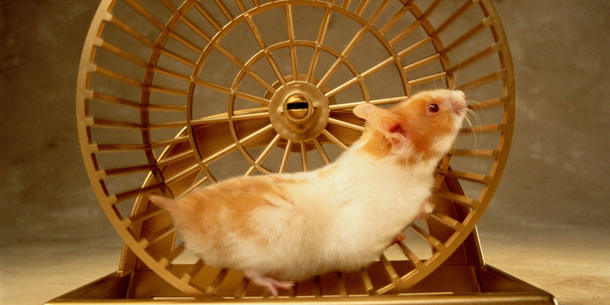 Image result for hamster in wheel