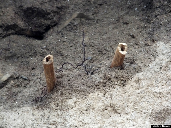 monk leg bones