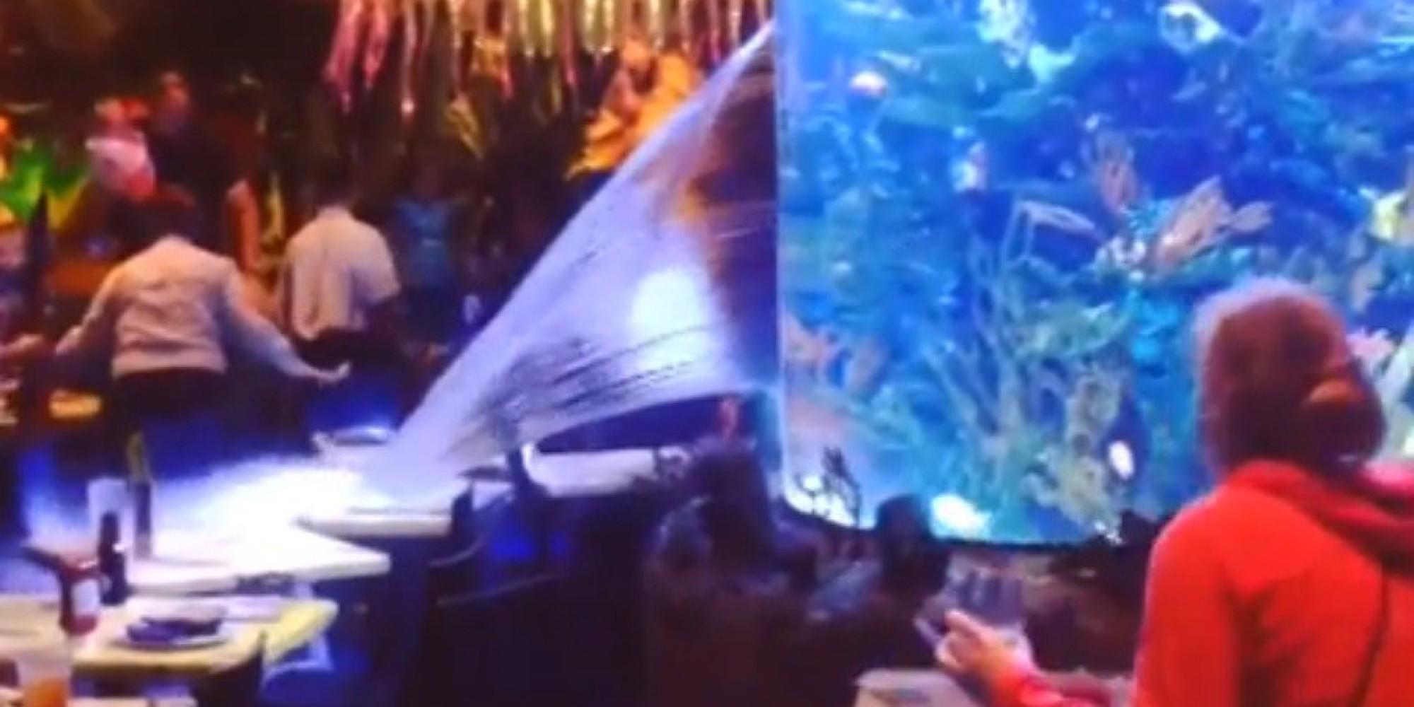 T rex cafe fish tank bursts at downtown disney restaurant for Disney fish tank