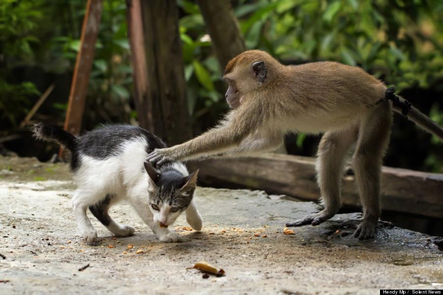monkey cat massage
