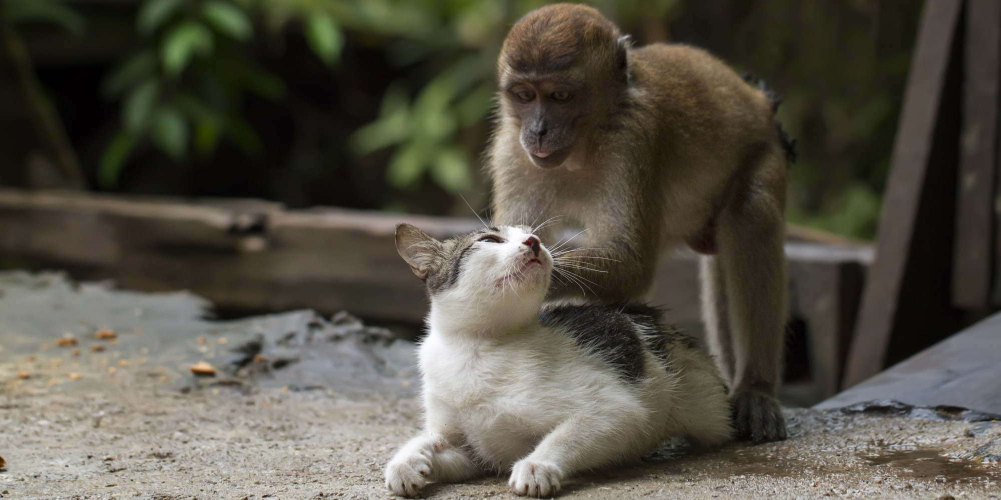 Monkey Massages Cat, And It's Adorable (PHOTOS) | HuffPost