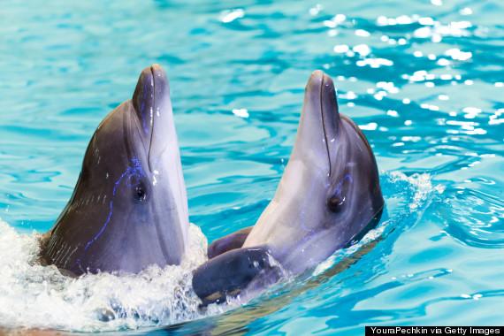 dolphins ukraine