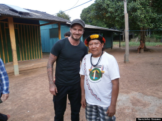 beckham rainforest