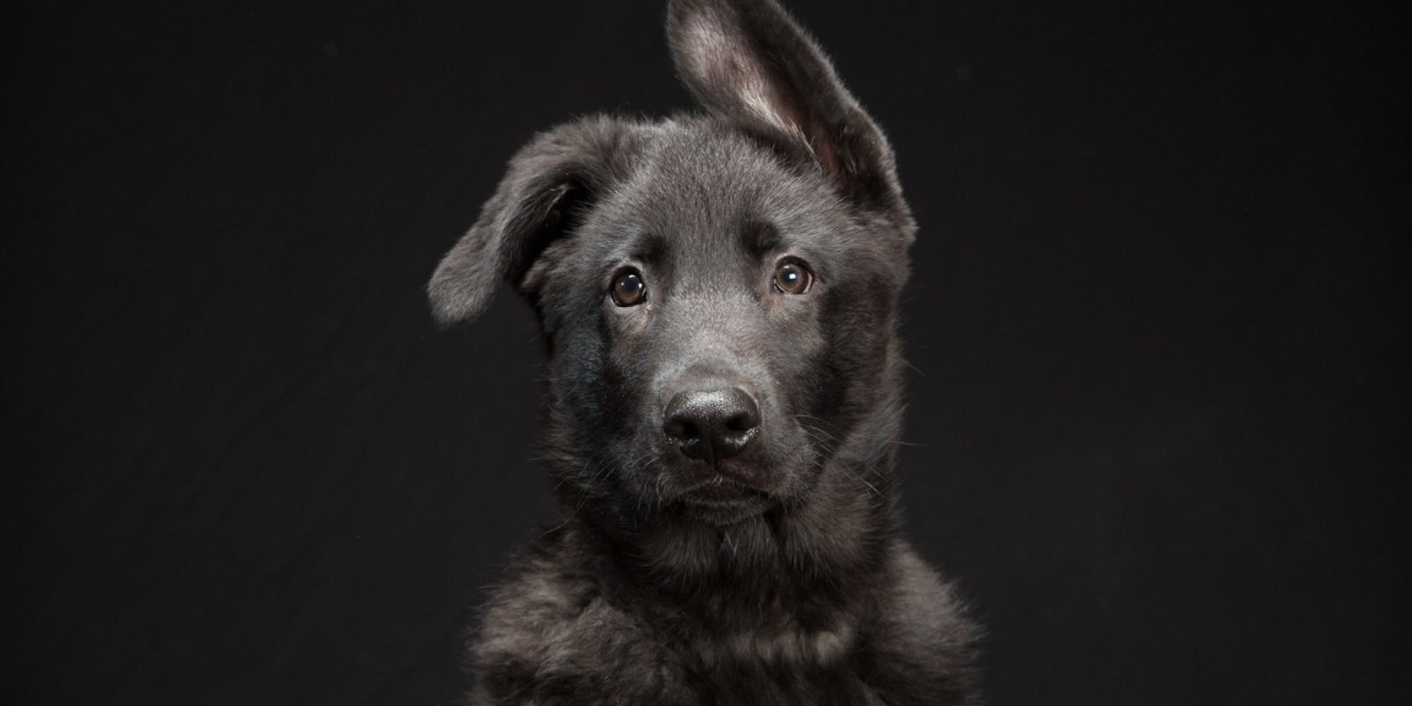 Stunning photo series highlights the beauty of black dogs that are stunning photo series highlights the beauty of black dogs that are often overlooked in adoption huffpost voltagebd Choice Image